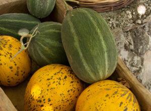 vegetarian holidays, suleyman's garden, yoga beach holidays