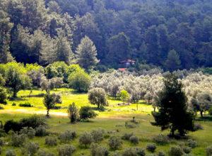 wellbeing holidays, luxury yoga retreats, yoga retreat europe